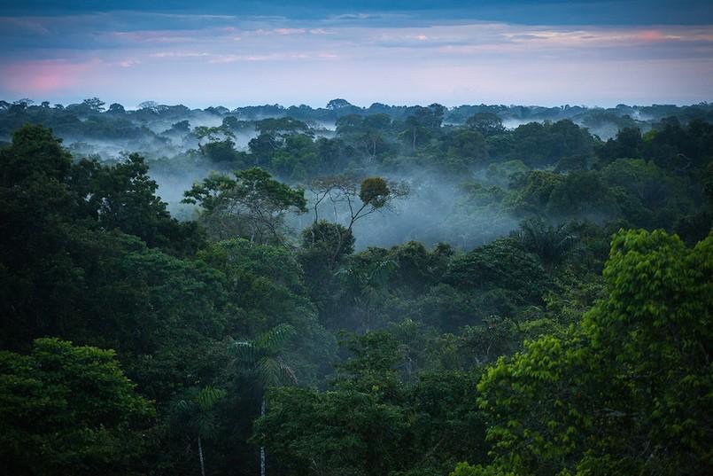rainforest canopy with fog