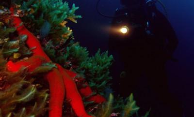 scuba diving at night starfish