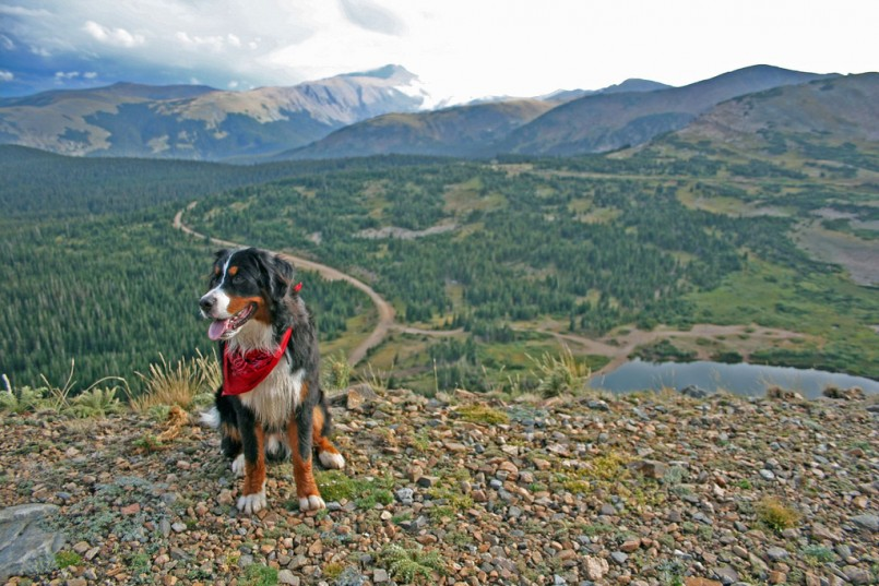 Best Outdoor Guard Dog Breeds