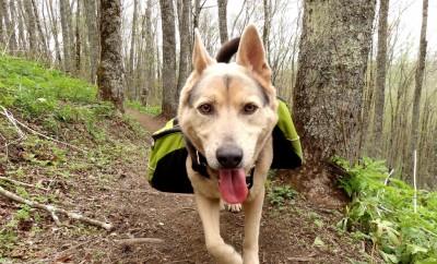 dog on a hike