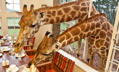 eat-breakfast-with-giraffes-at-this-incredible-hotel-in-kenya-photos