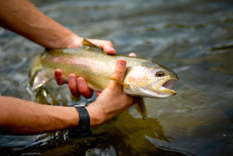 Guide to the best fishing bait for Best bait for salmon fishing in the river