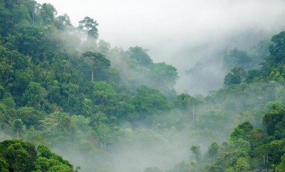 rainforest canopy with mist