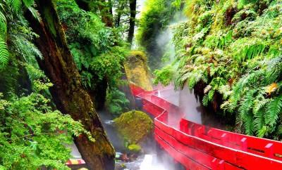 red wood bridge in Valdivian Rainforest