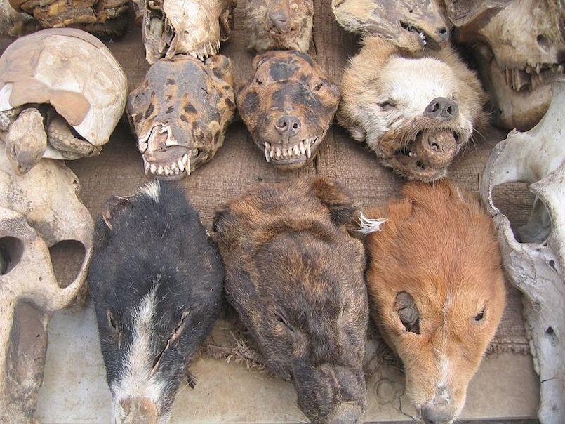 skulls and flesh at fetish market togo