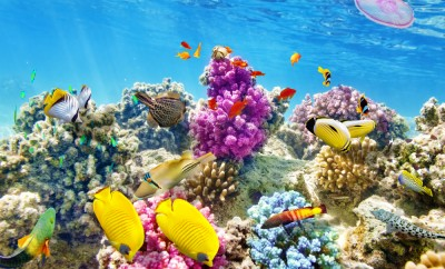 Wonderful and beautiful underwater world with corals and tropical fish
