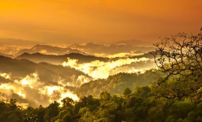 amazing wild in amazon