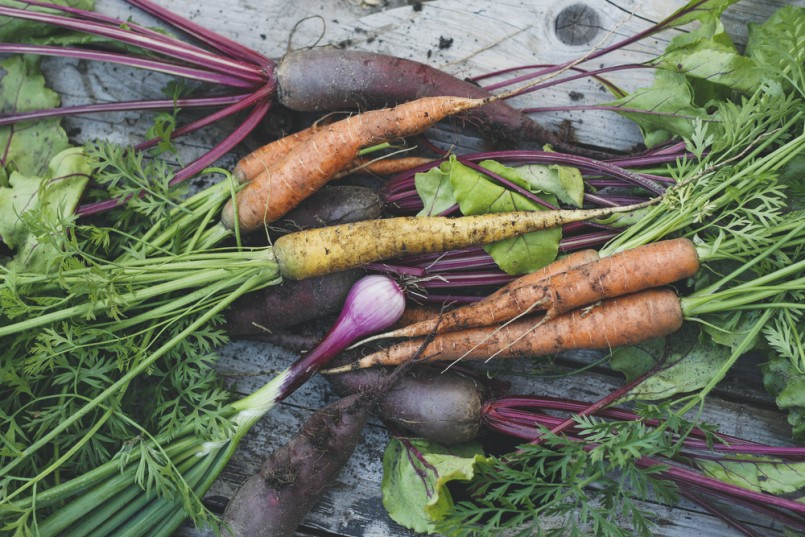 Freshly harvested organic carrots, beets and onions