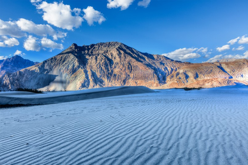 image of sand dunes in Himalayas on sunset. Hunder, Nubra valley, Ladakh, India
