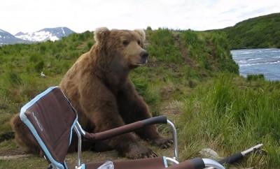 bear-camper