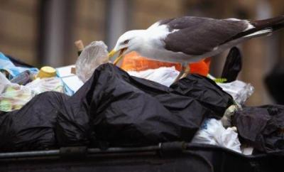 bird eating trash garbage waste