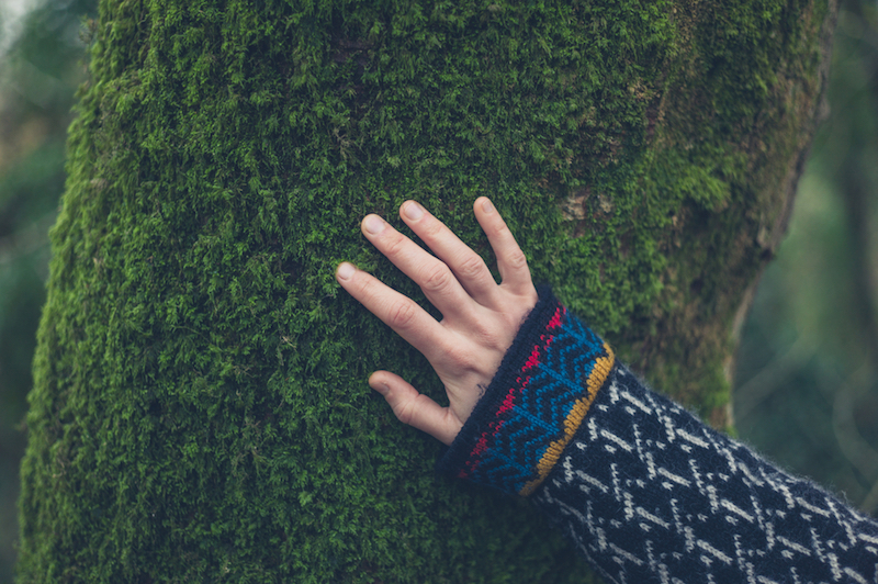 The hand of a young woman touching the moss on a tree in the autumn