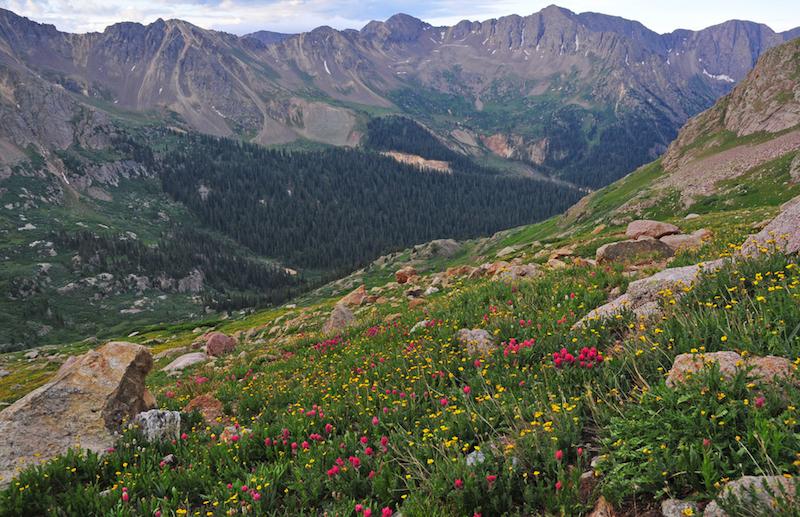 Wildflowers in the San Juan Mountains, Colorado Rockies, USA