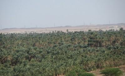 Sudan Trees