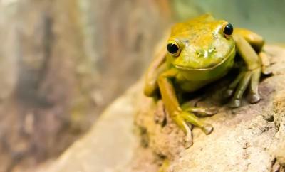biological Diversity day