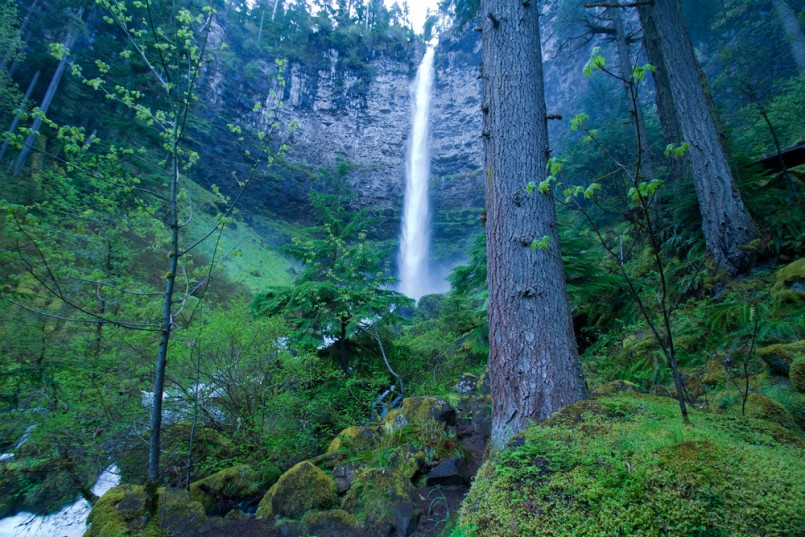Spring at Watson Falls, Umpqua National Forest, Oregon